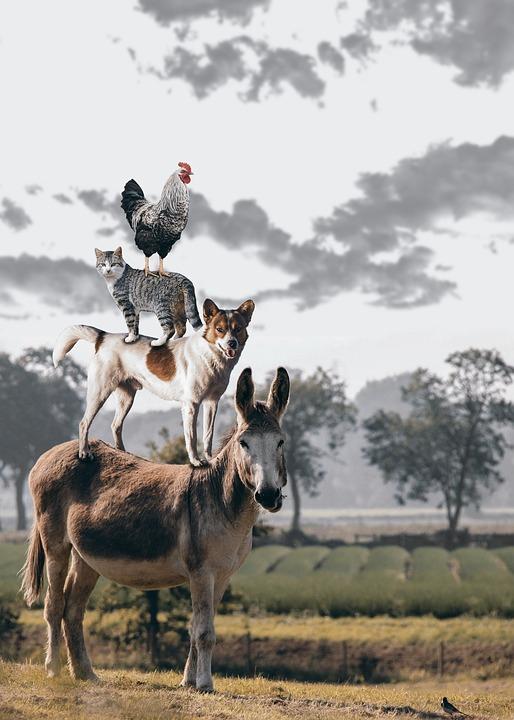 Lindenapotheke - Tiere